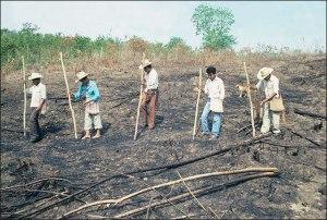 Nahua Men Planting Corn, 1985